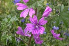 flora008